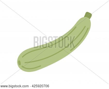 Green Squash Vegetable. Courgette Icon Isolated On White Background. Fresh Raw Food Plant. Natural H