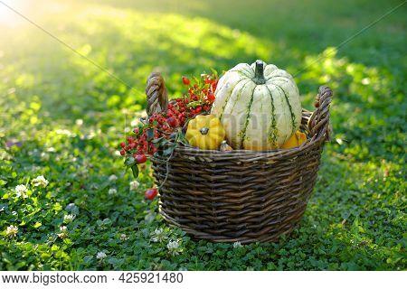 Pumpkin Abundance.thanksgiving And Halloween Holiday. Pumpkins Assortment In A Basket In Blooming Cl