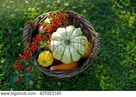 Pumpkin Abundance.thanksgiving And Halloween. Pumpkins Assortment In A Wicker Basket In Blooming Clo