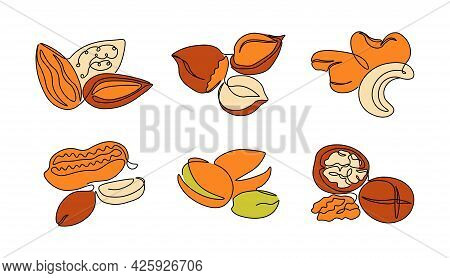 Continuous Line Nuts. One Line Trendy Nut Set Of Walnuts Pistachios Hazelnut Peanut Cashew. Vector M