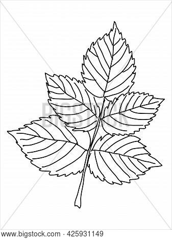 Raspberry Leaf In The Doodle Style. Hand-drawn Silhouette.  Botanical Medicinal Vector Plant
