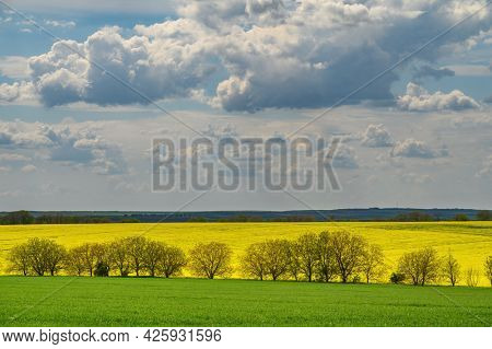 Small clouds at blue sky above yellow agricultural field of rape and green field of wheat, copyspace