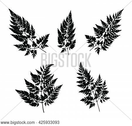 Black Grass Leaves Silhouettes Isolated On White. Autumn Fallen Field Grass Leaves. Stencil Vector