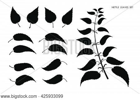 Black Silhouettes Of Nettle Grass Leaves Isolated On White Background. Autumn Fallen Field Grass Lea