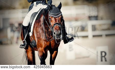 Equestrian Sport. Portrait Sports Stallion In The Double Bridle.the Legs Of The Rider In The Stirrup