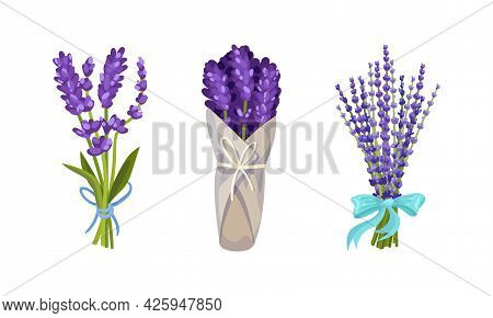 Lavender Fragrant Floral Twigs Tied With Ribbon And Wrapped In Paper Vector Set