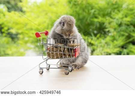 Easter Holiday Bunny Animal And Shopping Online Concept. Adorable Baby Rabbit Brown Eating Cookie Ca