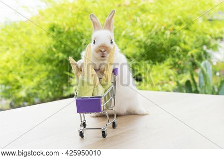 Easter Holiday Bunny Animal And Shopping Online Concept. Adorable Baby Rabbit White And Brown Pushin