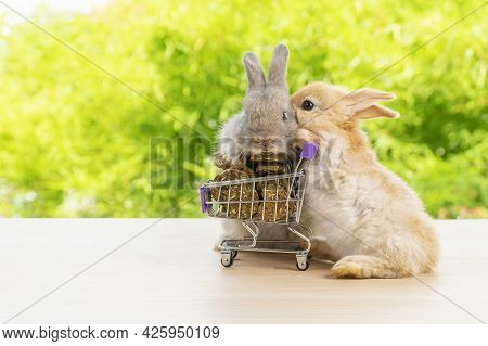 Easter Holiday Bunny Animal And Shopping Online Concept. Two Adorable Baby Rabbit Grey And Brown Pus