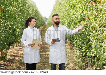 Orcharding, Farmers Working In Farm, Making Notes, Agricultural