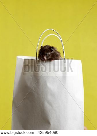 A Syrian Hamster Is Sitting In A Paper Bag On A Yellow Background, The Concept: Shopping, Selling, G