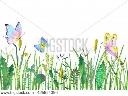 Meadow Wild Flowers, Herbs, Grasses With Colorful Butterflies. Watercolor Hand Drawn Botanical Illus