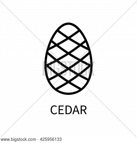 Line Icon Cedar Cone In A Simple Style. Vector Sign In A Simple Style Isolated On A White Background