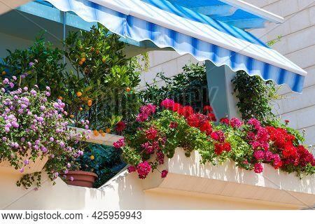 Decorated Balcony, Mediterranean Climate Flora.
