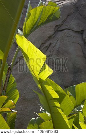 Palm Tree Leaf Sunny Day With The Sunrays Falling On The Leaf Rock And Blue Sky On Background
