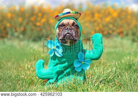 Funny Dog Costume. French Bulldog Dressed Up With Cactus Plant Halloween Costume With Fake Arms, Flo