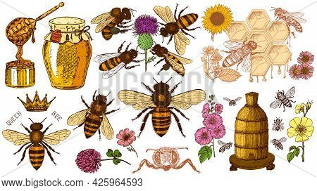 Bee And Honey Set. Mead And Insect And Floral And Beekeeping. Honeycomb And Hive Vector Engraved Han