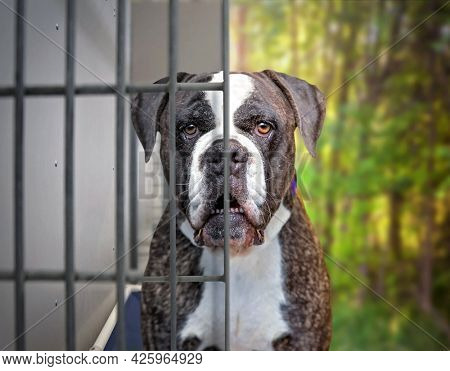 photo of a shelter dog half in a kennel and half outside