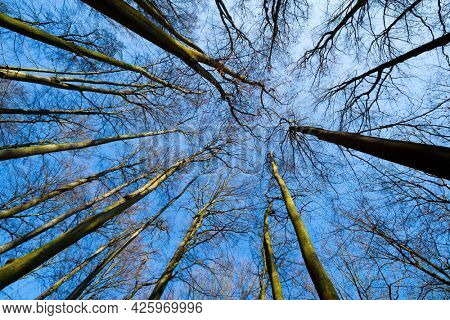 View up into the forest through the trees. Looking Up   Sky Through Tree