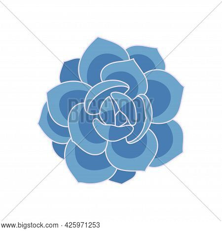 Succulent Echeveria Laui In Cartoon Style. Vector Illustration Plant Hand Drawn. Blue Succulent Isol