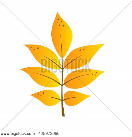 Autumn Cartoon Leaf In Yellow And Orange Colors. Ash Or Rowan Leaf. Isolated On White Background. Ve