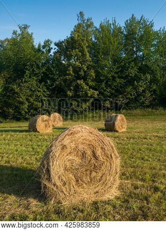 Rural Landscape With Rolls Of Hay, Meadow And Roll Bales During Summer Morning