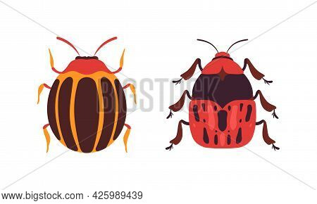 Bug Species Set, Top View Of Redbug And Colorado Insects Cartoon Vector Illustration