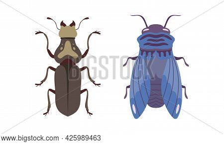 Bug Species Set, Top View Of Cricket And Fly Insects Cartoon Vector Illustration
