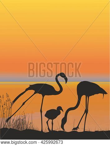 Vector Illustration Of A Family Of Flamingos On The Shore Lake