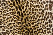 A close up photo of a leopards fur poster