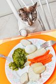 the cat at the table with food. poster