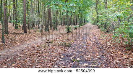 Fallen Leaves In A Spicy Smelling Autumn Forest