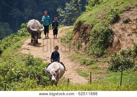 Unidentified  children graze buffaloe