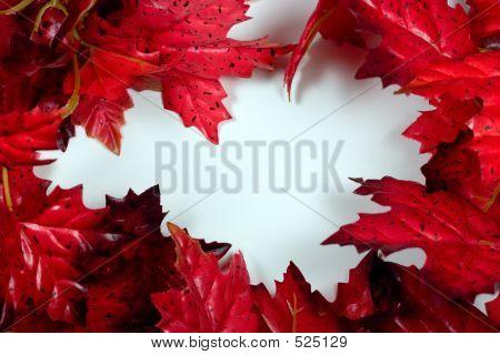 Red Maple Frame