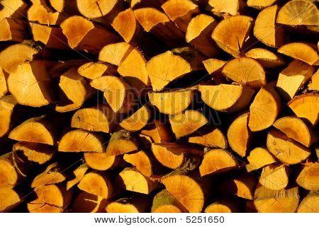 Sunlit Timber