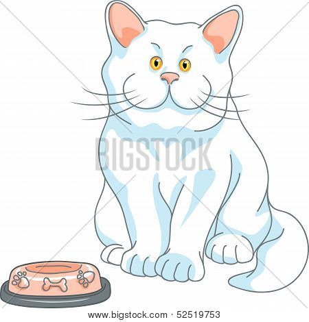 hungry cute white cat with yellow eyes and empty bowl isolated on the white background poster