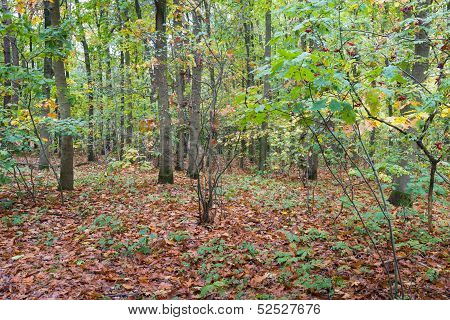 Scents And Colors In The Autumnal Forest