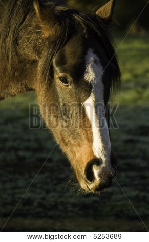 Portait Of A Horse