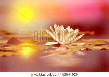 Reflective lotus flower