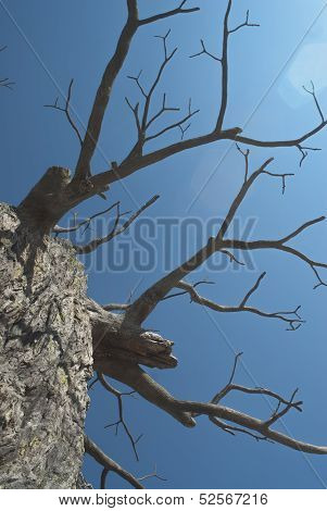 Craggled tree branches