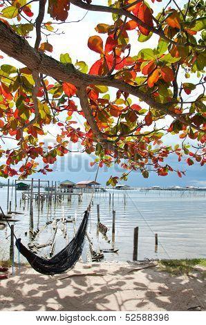 The Cradle Under Tree Near The Sea