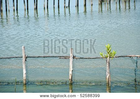 The Mangrove Near The Wooden Fence In The Sea