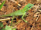 a green lizard poster
