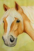 original watercolor painting of a haflinger horse on a green background poster