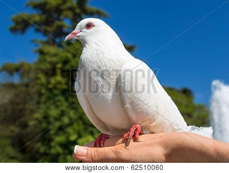 Pigeon Sitting On A Palm