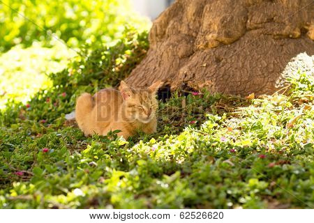 Red Domestic Cat Lying In A Meadow