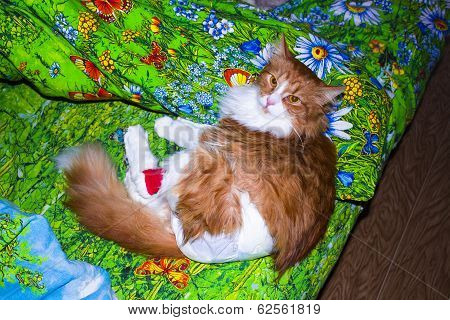 cat treatment