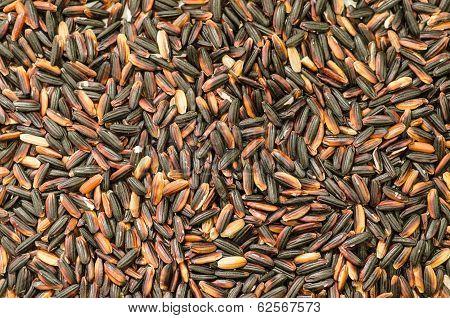 Closeup Of Black Thai Rice, Background - Stock Photo