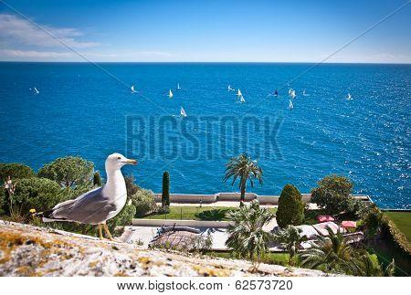 Seagulls are birds in the family Laridae. Azur coast.