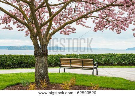 Cherry Tree Park Bench Sea